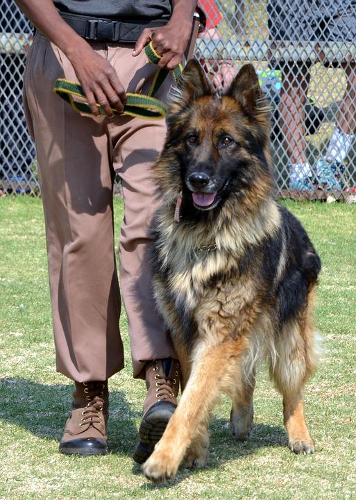 Le concept de dressage de chien